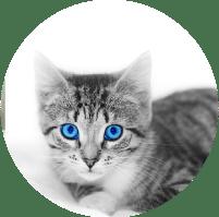 תמונת אווירה לקטגוריית צילום בעלי חיים. בתמונה גור חתולים בשחור לבן כשרק העיניים שלו כחולות מבריקות.